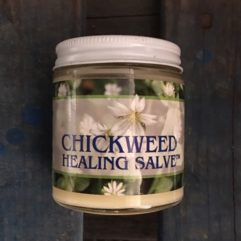 Chickweed Salve – 4oz
