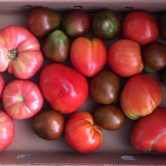Heirloom Tomatoes – per lb
