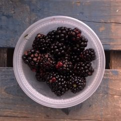 Fresh Blackberries – PINT